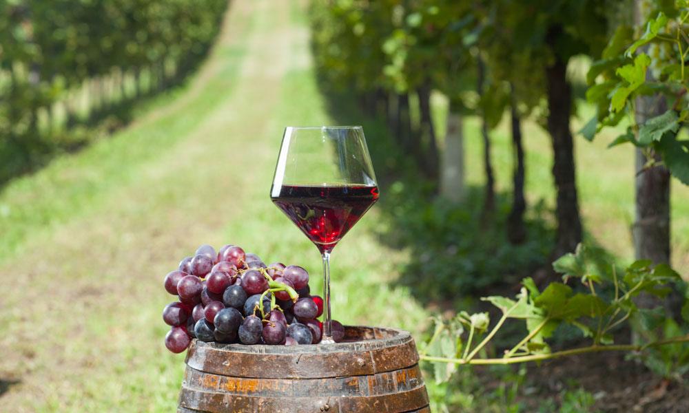wine in field stock image
