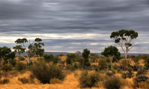 outback-nt
