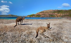 Lucky-Bay-Western-Australia
