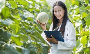 Melon-levy-to-strengthen-Au