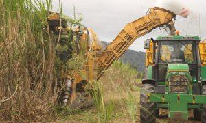 PlantHealthAustralia-sugarcane