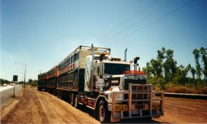 livestock-transport-darwin