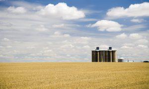 broadacre-grain-farm