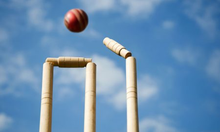 cricket stumps stock image