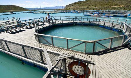 fish farm tasmania stock image