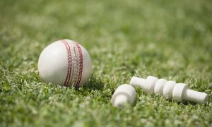 white ball cricket stock image