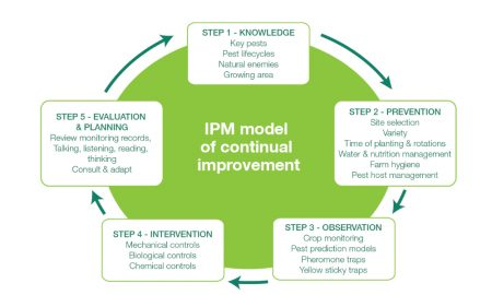 IPM model of continual improvement