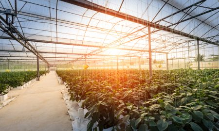 greenhouse farming stock image