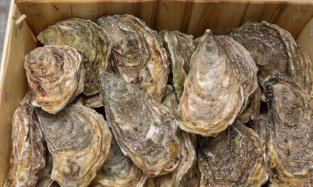 oysters rock western australia stock image