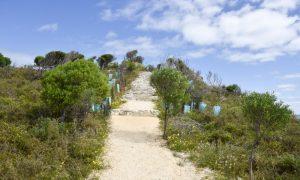 rottnest island tracks stock image