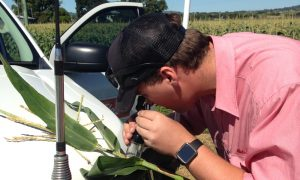 Young agronomist Josh Squibb will be one of the keynote speakers at the first university graduate and tertiary student forum being held as part of the 2019 Summer Grains Conference on the Gold Coast in July. Mr Squibb works for Elders, servicing Australia's largest food producer, Mulgowie Farming Company, in south east Queensland. Photo SUPPLIED