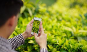 taking a photo of green leaves stock image