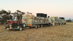 Trucks carrying millions of bees – and water supplies and forklifts – move at night after all the foragers have returned to the hive, so you might not actually see them being moved. Image: courtesy of Ian Zadow