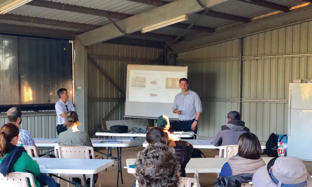 Featured Image: Vegetable and potato officer Callum Fletcher speaking to growers in Carnarvon, WA, while Vegetables WA Vietnamese industry extension officer, Truyen Vo, translates. Image courtesy of AUSVEG