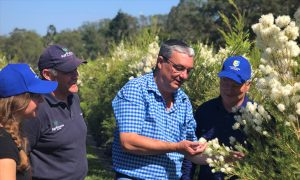 PHOTO: (R to L) Southern Cross University project leader Dr Merv Shepherd; Tony Larkman, CEO ATTIA (Australian Tea Tree Industry Association); John Smith, AgriFutures Australia General Manager, Research; and Julia Voelker, PhD researcher at Southern Cross University.