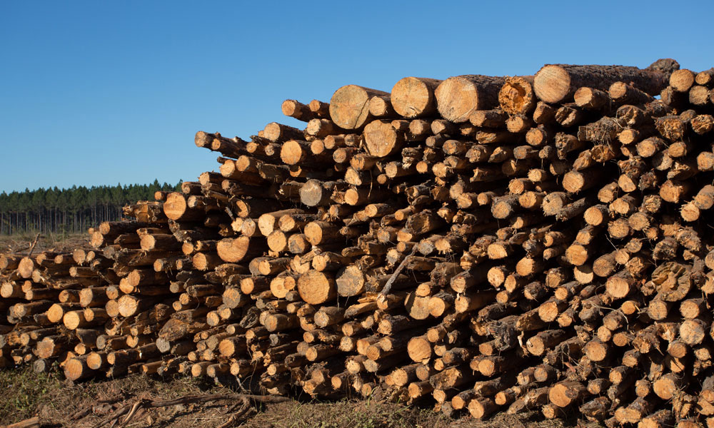 benefits of timber