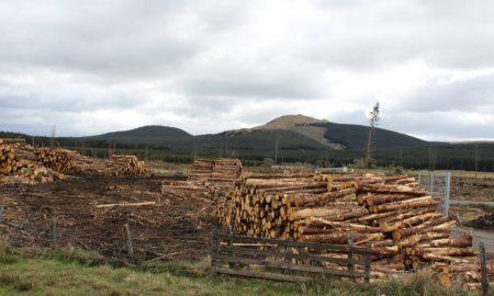 selling Australian timber