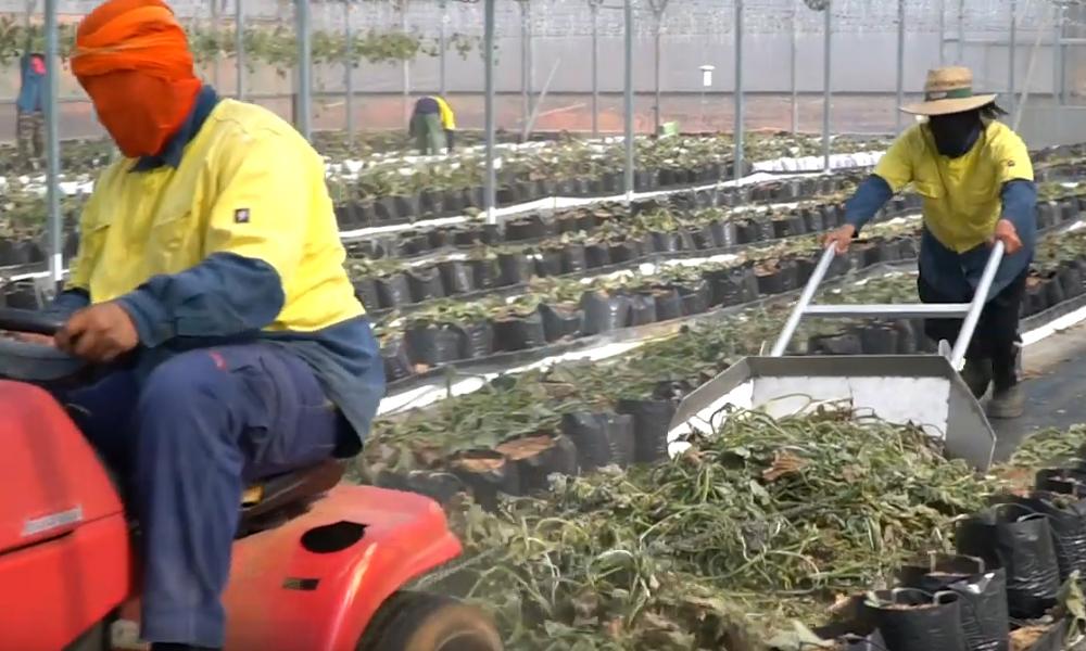 disinfecting greenhouses