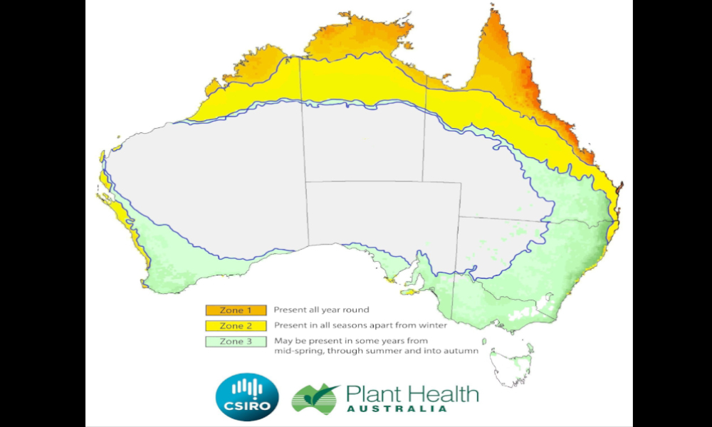 Fall Armyworm Continuity Plan for the Australian Grains Industry