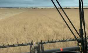 high moisture grain at harvest