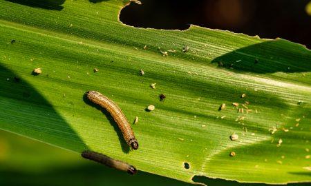 Australia's biosecurity system