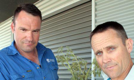 Kurt Lindbeck, Geoff Casburn green lupin plant with Phomopsis. Image courtesy of NSW DPI