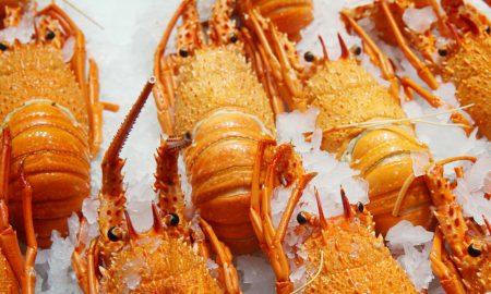 Western rock lobsters