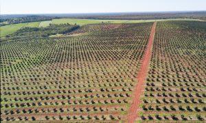 Australian macadamia crop modelling