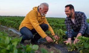 management of soil-borne diseases